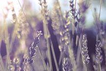 Lavender concept board