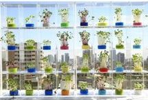 Home: Urban Garden, Patio & Balcony / Plant growing & small backyard/balcony ideas. / by Dulce RL