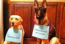 Dog shaming, Christmas edition