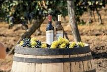 Wine / Come explore rare wine-making areas, current trends, or new bottles, fresh to the market!
