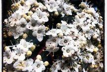 Primavera 2015 / Os presentamos la primavera 2013 de Casa Grande de Fuentemayor....nuestro jardin centenario comienza a brillar como nunca con sus hermosas flores y plantas....
