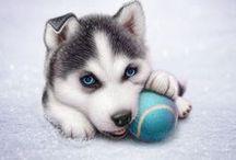 ^_^ pet / faithful friend and companion