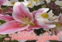 Valentine's Day / Valentine's Day Special Flowers