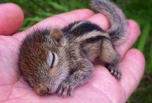 All Creatures Great & Small... / Animals: Some cute n cuddly; some big & scary!  / by Sunflower Mom