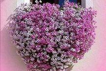 Flowers in Greece / #Paros #Greece #Island