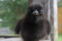 YOU LOOKIN' AT ME? / Birds...my favorite