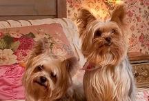 Living with dogs/bydlení s pejsky