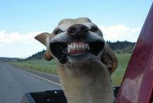 DOGS AND DOGS AND DOGS / Dogs, Funny Dogs