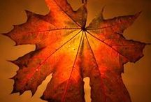 fall things / by Marcie Goforth Wood