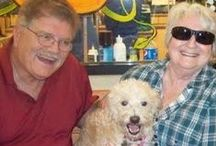 """Suzie the """"Wonderful"""" dog / Our dog Suzie, a Poodle mix was adopted by us from Florida Little Dog Rescue.  / by Pat Curry"""