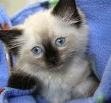 Who Can Resist a Cute Kitten? / Adorable kittens at Cat Depot and repins from around the world.