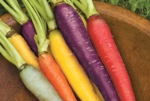 Our Colors are Made With: / Torie & Howard USDA Certified Organic Candy have NO artificial colors, dyes or flavors.  The beautiful natural colors of our delicious 4 colors come from beautiful carrots, beets & other veggies!  Enjoy the goodness!