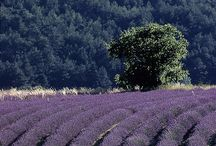 ✿⊱ Provence ✿⊱╮ / Pinning respectfully  / by Flan'Elle Et Prune