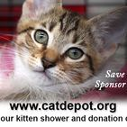 Cat Depot Fundraising Events / Ads, Flyers, Promotions