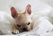 Cute / I love dogs and nothing melts my hear more than cute puppy and dog pictures. / by Isabella | ASOS Stylist