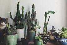 petals & plants / all things cacti, petals and succulents