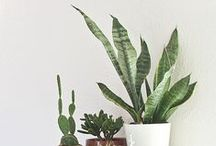 Plants / There is nothing like beautiful plants! / by Isabella   ASOS Stylist