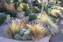 Drought Tolerant Grasses / Plantenders Nursery - check us out at plantenders.com or in-person at our nursery - 15882 Santiago Canyon Road, Silverado, Orange County, CA.