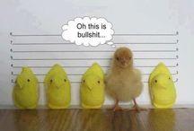 Funny~ / VERY funny! / by Sheila Barrett