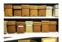 Inside The Archive