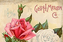 DIY Vintage Rose Garden / Beautiful ephemera for the vintage Rose Garden. Seed Catalogues, Guides, Tradecards, Ads, Postcards, Scraps and more. 