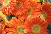 Decoreren met oranje / Oranje inspiratie