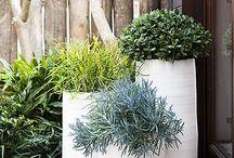 My Green Thumb / gardening