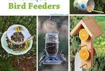 DIY Bird Feeding