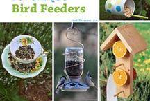 DIY Bird Feeding