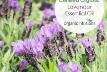 French Lavendar Lovlies / All things Lavendar are special.