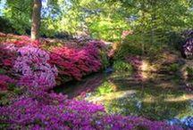 Top 10 London Gardens / Read about our top 10 London Gardens on our Cornelia James blog - http://www.corneliajames.com/blogs/news/10-best-london-gardens