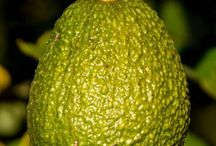Avocado. Natures Grease Bomb! / Avacado, delicious with amazing health and beauty benefits.