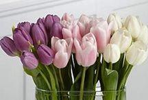 --- .•* ✱ My loved Flowers .•* ✱--- / by Irma Ibarra