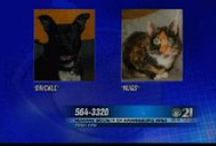 Pet of the Week / CBS 21 News shows you pets who need loving homes!  / by WHP, CBS 21 News