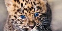 Leopard, pantera, jaguar, tigre, luipaard of panter? / Draag je nu een luipaard-, tijger-, jaguar- of panterprint?