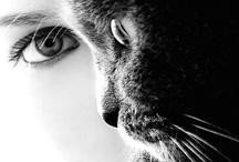 Photography I love / by Vegan Teri