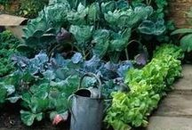 Veggie Patch / by Elaine Holden