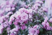 f l o w e r s / Flower Inspiration!