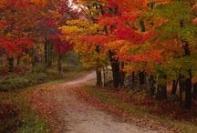 Country Roads / by Lynn Blackwell