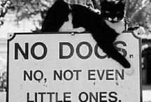 Cat Crazy / No Dogs in this board, No, Not Even Little Ones.