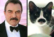 Tuxedo Cats / LOVE, LOVE, LOVE Tuxedo cats-- especially my Max and Winkie! / by JoAnn