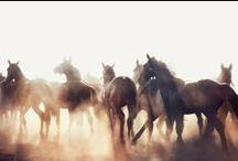 Swift Horses