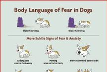 Dog & Cat Behavior / Why your pets do what they do