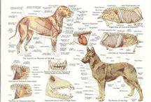 Veterinary Medicine / All things veterinary