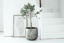 + zieleń w domu
