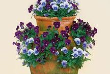 Outdoor Flower Pots / Spice up your yard with different sizes of Outdoor Flower Pots at Exotic Flowers, Boston.