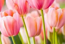 Spring Time Flowers! / Hop into spring with these beautiful spring flowers.