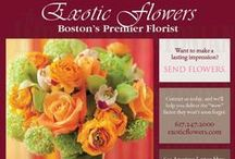 Exotic Flowers - Boston MA / Exotic Flowers was awarded the Best Florist Award in 2012, 2013 & 2014 by the Improper Bostonian Magazine. Imagine the relief you will feel knowing your special day is handled by Exotic Flowers. Copley Plaza Hotel, Seaport Hotel, Fenway Park, Venezia's are just a few of the venues we have created weddings in.