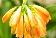 Plants - Zimmerpflanzen - Feng Shui Energie / Zimmerpflanzen, Feng Shui Energiepflanzen, Zierpflanzen