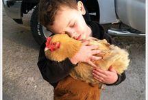 Chickens! / by Debbi Dean